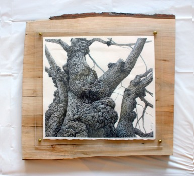 "Old Willow - 13"" x 14"" - Watercolour mounted on live edge wood."